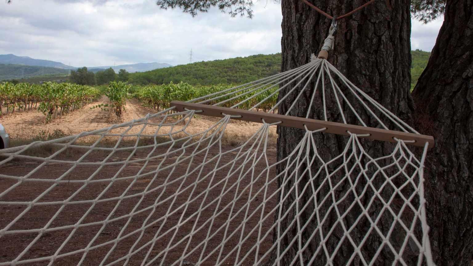 barraca entre vinyes - barraca pi gros
