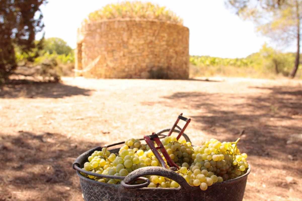 barraca entre vinyes - experiència viticultor